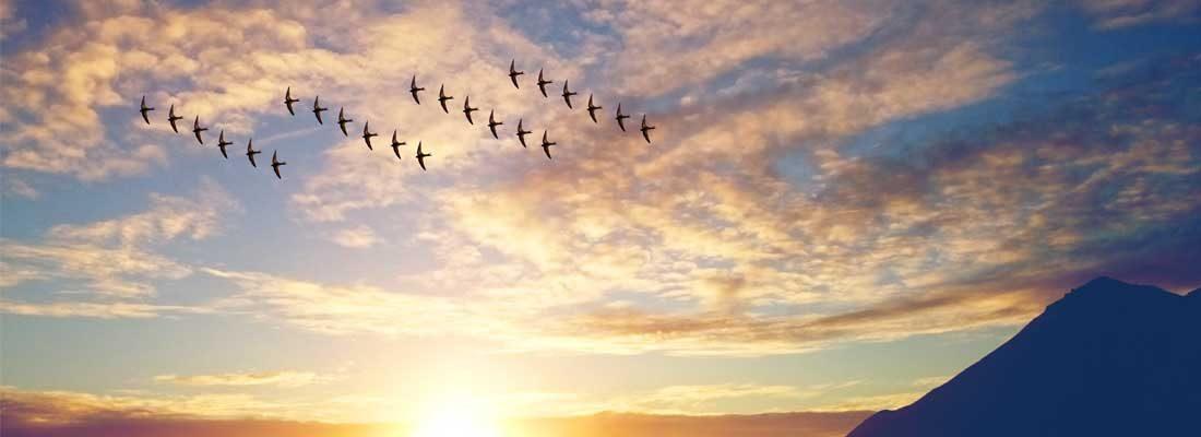 parse migration